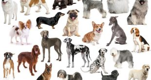 Use a Dog Breed Selector Online to Choose Your New Best Friend