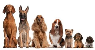 Dog Breed Selector - Everything You Need to Know
