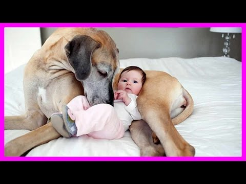 Mama Dog Takes Care Baby Pet Care Tips How To Care Your Pets