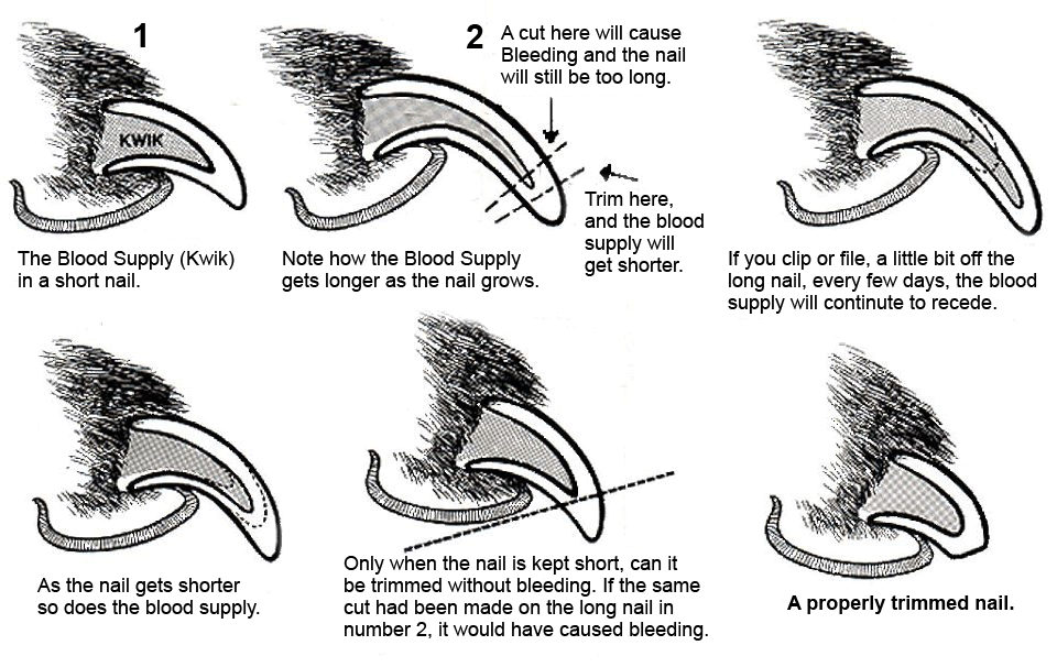 Nail Trimming Diagram