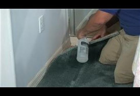 how to clean dry cat urine from carpet