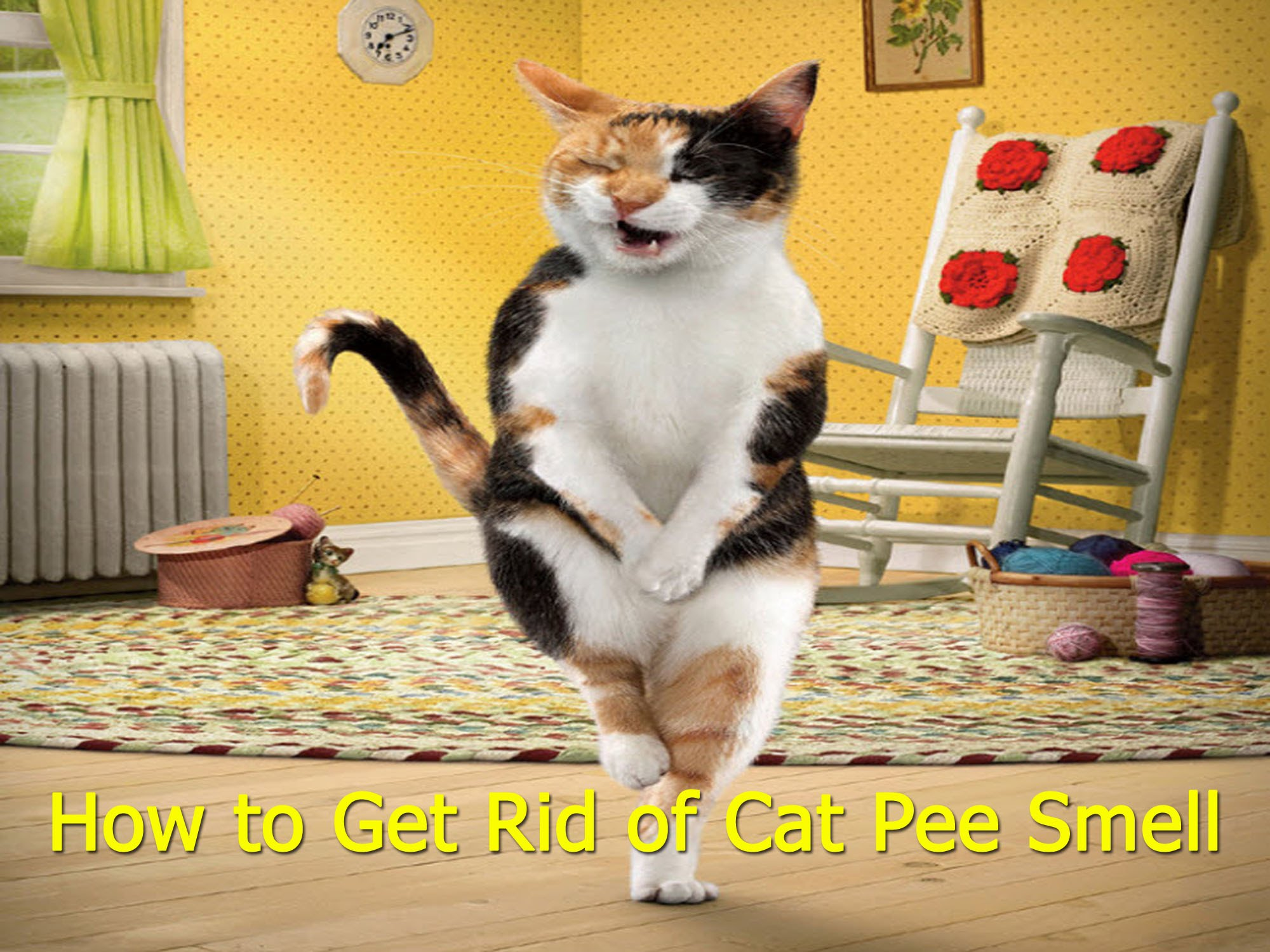 How to Get Cat Urine Smell Out of Clothes photo