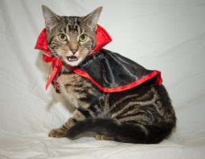cat in dracula costume
